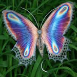 eGreeting - Butterfly image