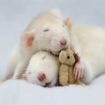 eGreeting - Mice and teddy image