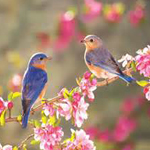 eGreeting - Birds in spring image